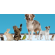 Dovecote Pet Care